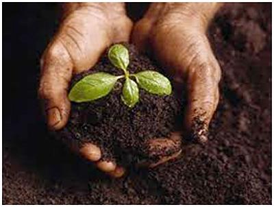 amazing journey planting