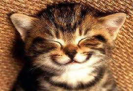 smiley cat