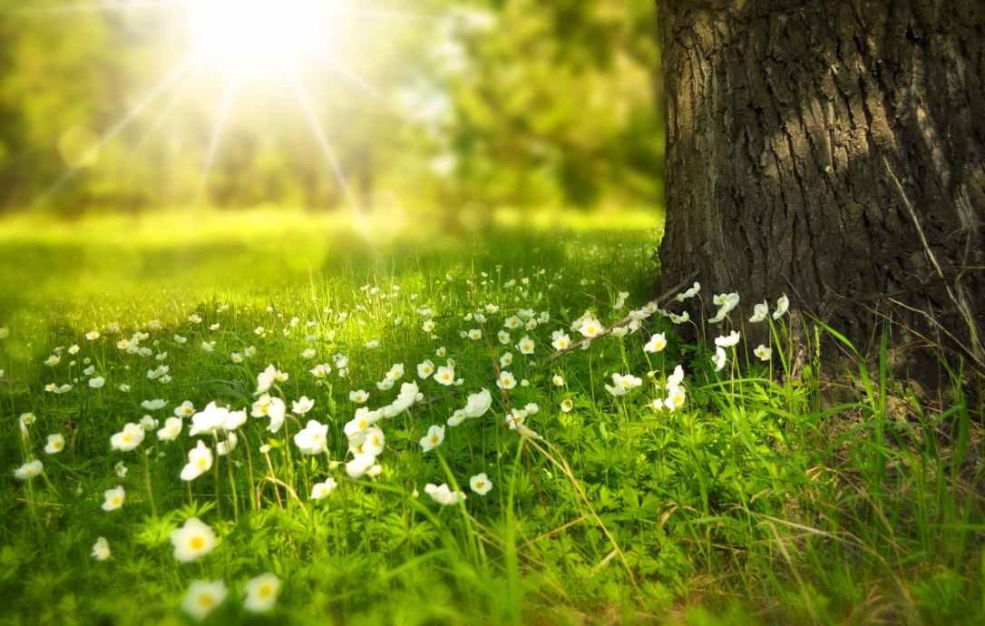 spring-tree-flowers-meadow-60006.jpeg